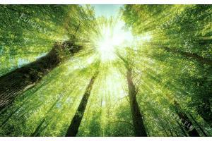 Фототапет зелена гора поглед отдолу корони дървета