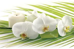 Фототапети спа орхидеи в бяло и зелено