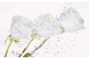 Фототапети кристални рози с водни капки