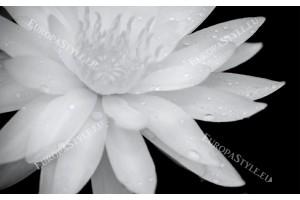 Фототапет голяма бяла лилия