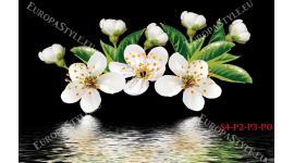 Фототапет бял пролетен цвят на черен фон 2