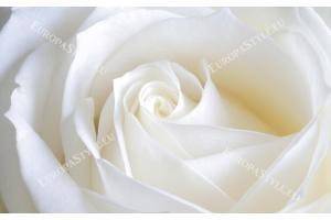 Фототапети макро роза бяло крем