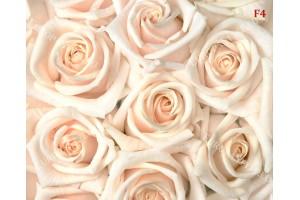 Фототапети нежни пастелни големи рози