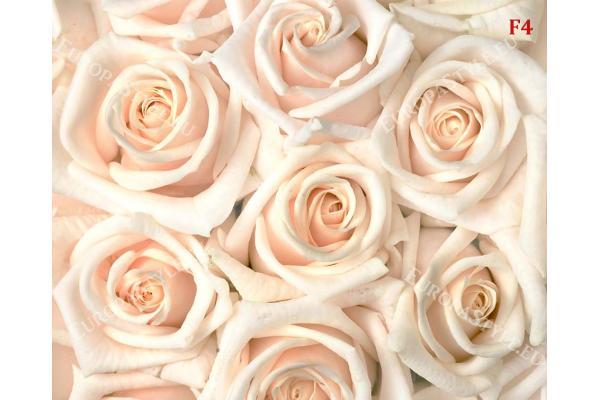 Фототапет-30% размер 330 см-260 см - кремави рози