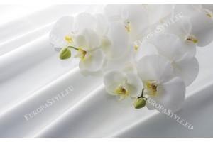 Фототапети бели орхидеи на копринен бял фон