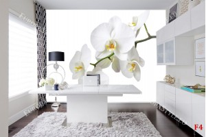 Фототапет клонка бяла орхидея