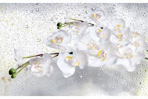 Фототапети клонка орхидеи на сиви водни капки