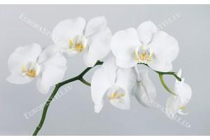 Фототапет бяла орхидея на сив фон