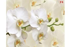 Фототапет клонка бяла орхидея на фон крем