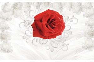 Фототапети червена роза фон пера и бели рози в 2 варианта