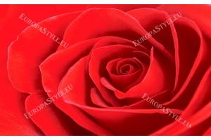 Фототапети розa фон в червено