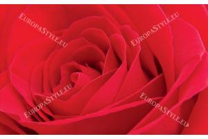 Фототапети голяма червена роза 2