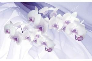Фототапети орхидеи на фон от коприна