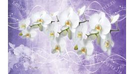 Фототапет клонка орхидеи на лилав фон