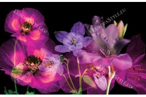 Фототапети ефирна композиция от цветя на черен фон