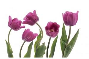 Фототапет подредени лалета на бял и розов фон