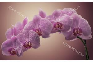 Фототапет клонка нежно-лилави орхидеи