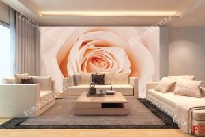 Фототапети бледо оранжева роза