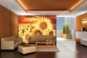 Фототапети големи слънчогледи на поле в оранжево