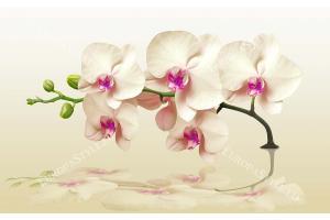 Фототапет клонка орхидея бежов нюанс