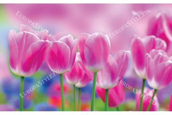 Фототапети прекрасни розови лалета