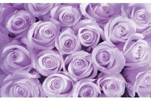 Фототапети букет от розови и лилави рози в 2 цвята