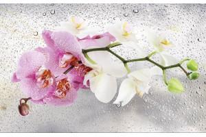 Фототапети клонка орхидея на фон водни капки