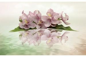 Фототапети пастелна композиция с клонка орхидея в два варианта