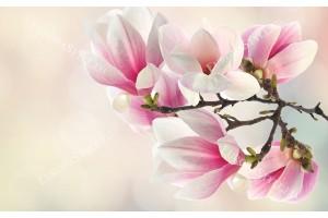 Фототапети клонка розова орхидея преливащ фон