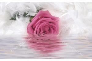 Фототапети розова роза на нежен фон от бели пера в 2 цвята