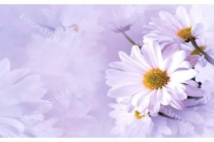 Фототапети нежни маргаритки в розово и лилаво 2 цвята