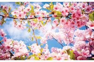 Фототапет клонка пролетен цвят дърво синьо небе