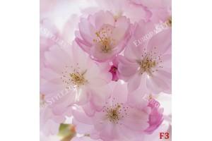 Фототапет пролетен цвят макро в розово 2