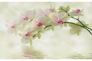 Фототапети нежна клонка зелена орхидея и вода