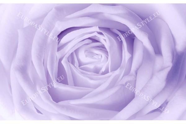 Фототапети голяма светла роза в жълто и лилаво