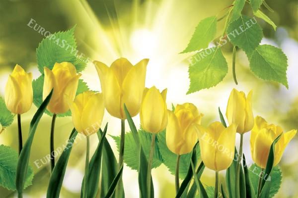 Фототапети изглед на жълти лалета със лъчи