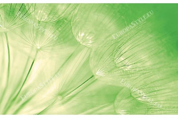 Фототапети групирани глухарчета в зелено