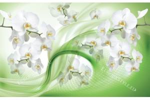 Фототапети бели орхидеи на абстрактна зелена основа