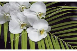 Фототапет клонка орхидея със зелена папрат