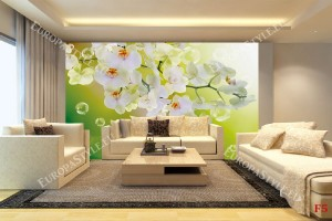 Фототапет орхидеи с капки на зелен фон
