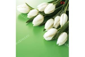 Фототапет бели лалета на нежно зелен фон