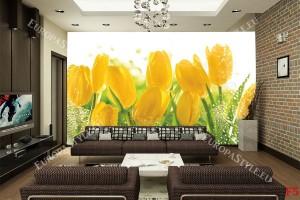 Фототапет жълти лалета с водни с капки