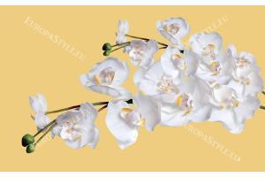 Фототапети клонки орхидеи на жълт фон