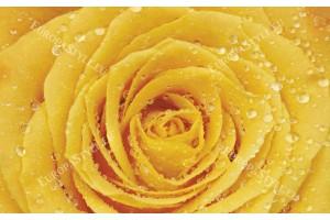 Фототапети жълта роза водни капки