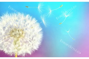 Фототапет бяло глухарче с цветен мултиколор фон