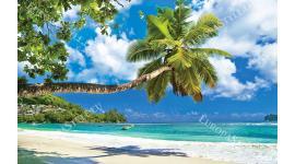 Фототапет морски пейзаж самотна хоризонтална палма