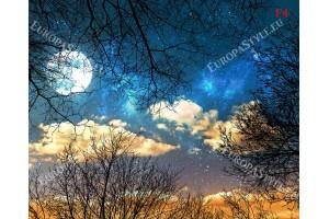 Фототапет нощно небе с кръгла луна и клони от дървета