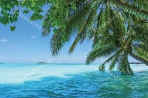 Фототапети изглед палми с прекрасен океан
