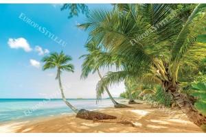 Фототапети палмов бряг море в близък план