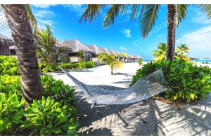 тропическа романтика с хамак и палми